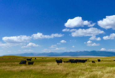 Classic Montana Ranch